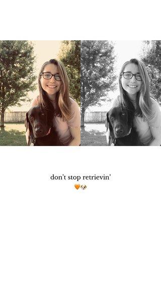 don't stop retrievin' 🧡🐶