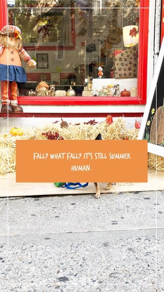 Fall? What fall? It's still summer human.
