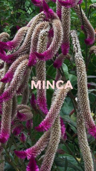 MINCA