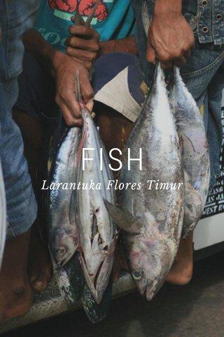 FISH Larantuka Flores Timur