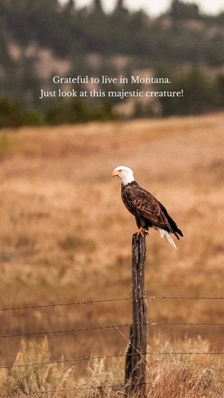 Grateful to live in Montana. Just look at this majestic creature!