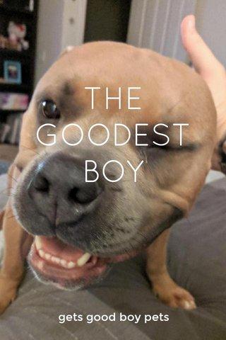THE GOODEST BOY gets good boy pets