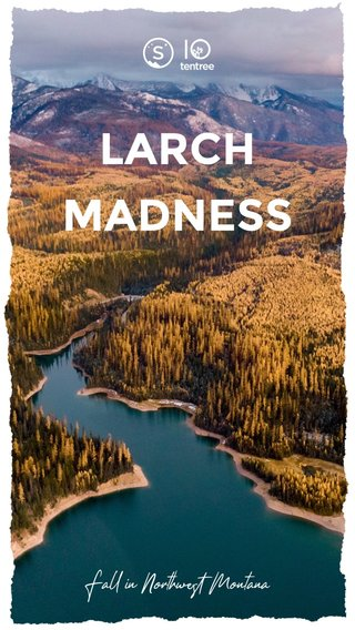 LARCH MADNESS Fall in Northwest Montana