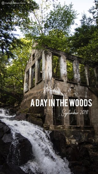 A day in the woodS September 2018