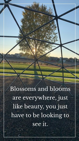 Blossoms and blooms are everywhere, just like beauty, you just have to be looking to see it.