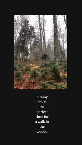 A rainy day is the perfect time for a walk in the woods.