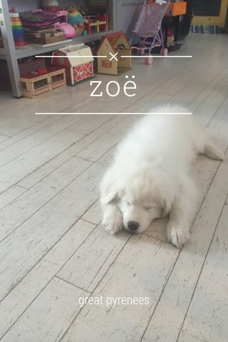 zoë great pyrenees