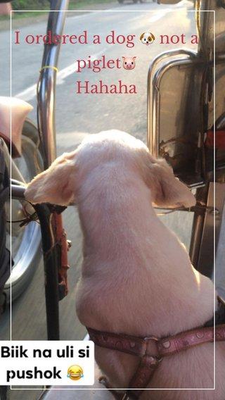 I ordered a dog 🐶 not a piglet🐷 Hahaha