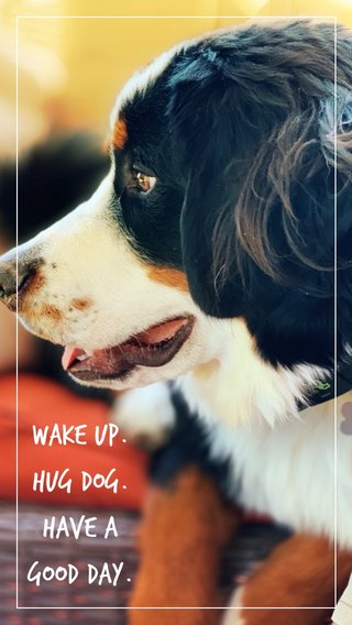 WAKE UP. HUG DOG. HAVE A GOOD DAY.