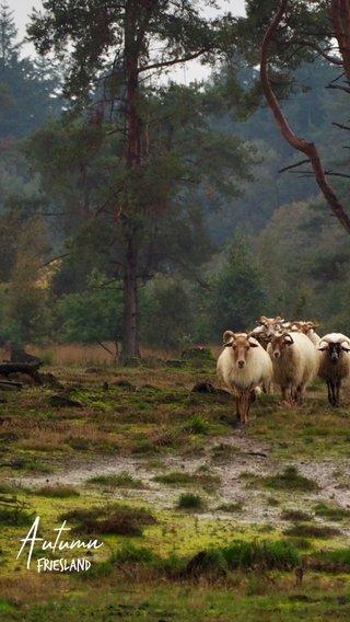 Autumn Friesland