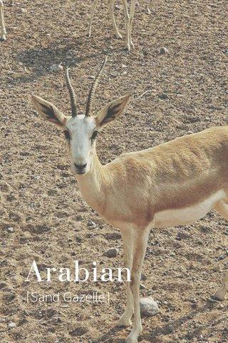 Arabian |Sand Gazelle|