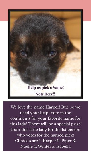We love the name Harper! But so we need your help! Vote in the comments for your favorite name for this lady! There will be a special prize from this little lady for the 1st person who votes for the named pick! Choice's are 1. Harper 2. Piper 3. Noelle 4. Winter 5. Isabella Help us pick a Name! Vote Here!!