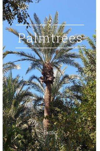 Palmtrees Exotic