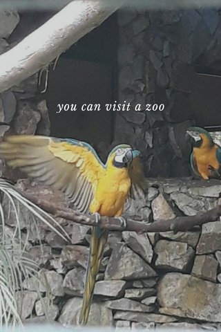 you can visit a zoo