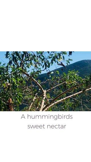 A hummingbirds sweet nectar
