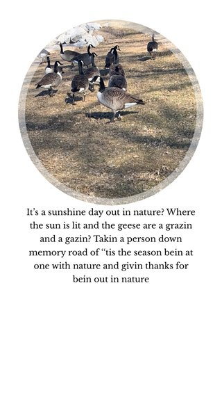It's a sunshine day out in nature? Where the sun is lit and the geese are a grazin and a gazin? Takin a person down memory road of ''tis the season bein at one with nature and givin thanks for bein out in nature