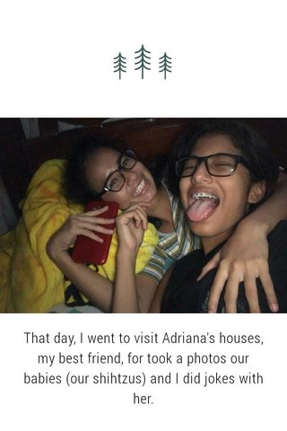 That day, I went to visit Adriana's houses, my best friend, for took a photos our babies (our shihtzus) and I did jokes with her.