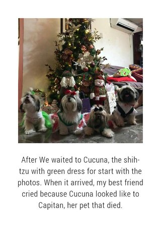 After We waited to Cucuna, the shih-tzu with green dress for start with the photos. When it arrived, my best friend cried because Cucuna looked like to Capitan, her pet that died.