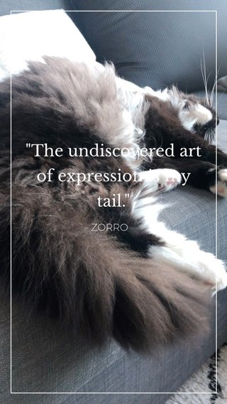 """""""The undiscovered art of expression is my tail."""" - ZORRO"""