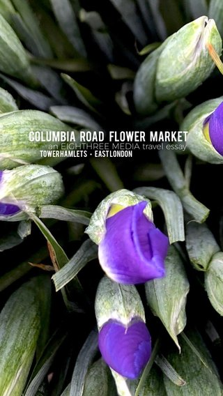 COLUMBIA ROAD FLOWER MARKET an EIGHTHREE MEDIA travel essay Tower Hamlets • East London