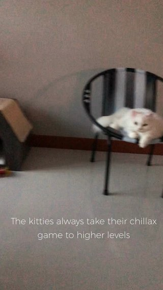 The kitties always take their chillax game to higher levels