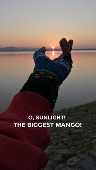 THE BIGGEST MANGO! O, SUNLIGHT!