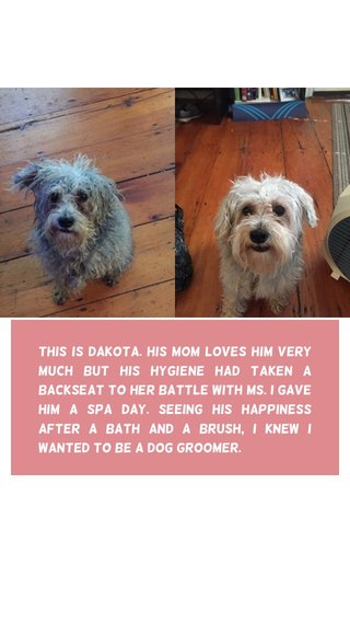 This is Dakota. His mom loves him very much but his hygiene had taken a backseat to her battle with MS. I gave him a spa day. Seeing his happiness after a bath and a brush, I knew I wanted to be a dog groomer.