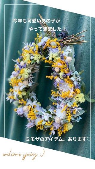 welcome spring :) ミモザのアイテム、あります♡ 今年も可愛いあの子が やってきました!