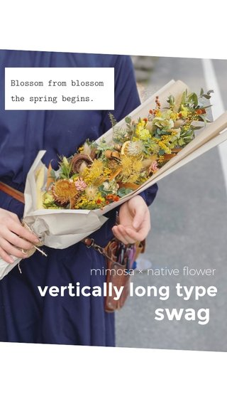swag vertically long type mimosa × native flower Blossom from blossom the spring begins.