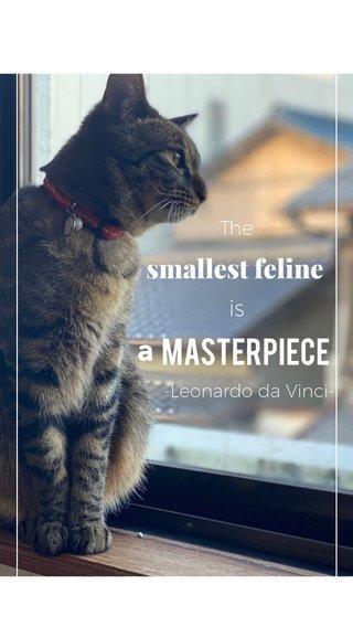 masterpiece a smallest feline is The -Leonardo da Vinci-