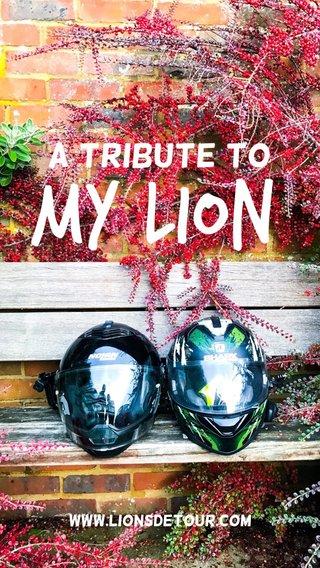 My lion A tribute to www.lionsdetour.com