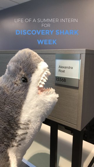 DISCOVERY SHARK WEEK LIFE OF A SUMMER INTERN FOR