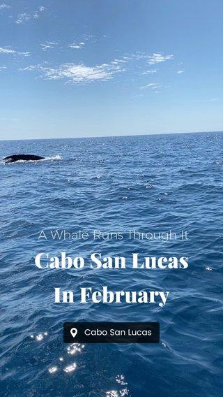 Cabo San Lucas In February A Whale Runs Through It