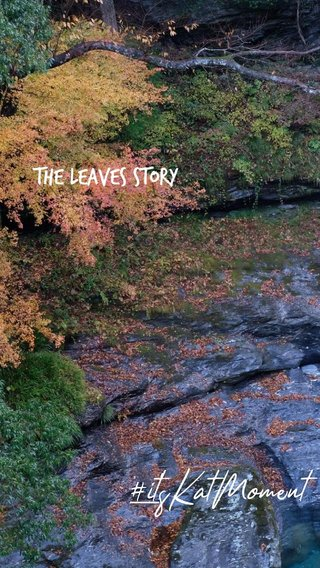 #it'sKatMoment the leaves story