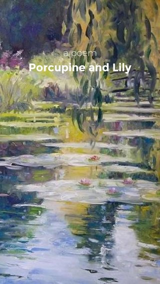 Porcupine and Lily a poem