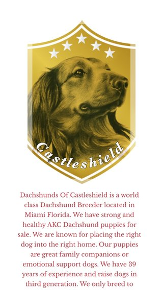 Dachshunds Of Castleshield is a world class Dachshund Breeder located in Miami Florida. We have strong and healthy AKC Dachshund puppies for sale. We are known for placing the right dog into the right home. Our puppies are great family companions or emotional support dogs. We have 39 years of experience and raise dogs in third generation. We only breed to improve their temperament, health and conformation. Our Dachshund Dogs are health screened, DNA tested, OFA /FCI certified hips and elbows. All our Dachshund puppies are raised with quality care from day one to insure a happy, confident, well-balanced temperament. They are around children, cats and larger dogs to make sure they will acclimate well with any kind of household. These Dachshund puppies come current on their vaccinations, are dewormed and microchipped. We offer genetic health guarantee, life time support, a vet health certificate, AKC registration papers and a useful puppy starter package. As an excellent Dachshund breeder we work very hard with our new family members to insure all our puppies are well socialist and pre-spoiled when leaving to their new forever homes. You will be glad you chose your Dachshund puppy from us. https://www.dachshundsofcastleshield.com
