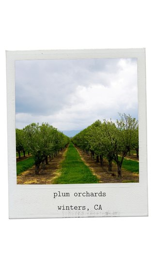 plum orchards winters, CA