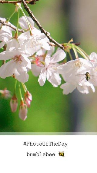 #PhotoOfTheDay bumblebee 🐝