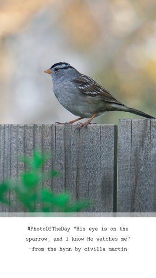 """#PhotoOfTheDay """"His eye is on the sparrow, and I know He watches me"""" -from the hymn by civilla martin"""