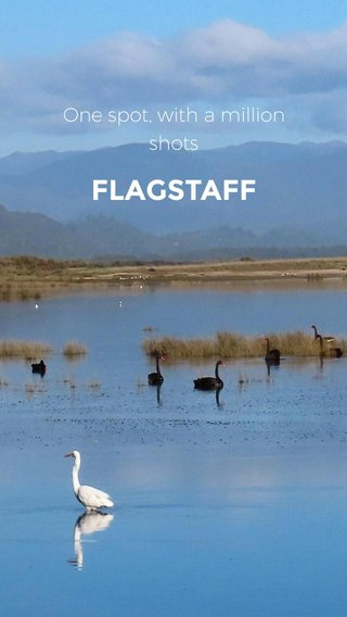 FLAGSTAFF One spot, with a million shots