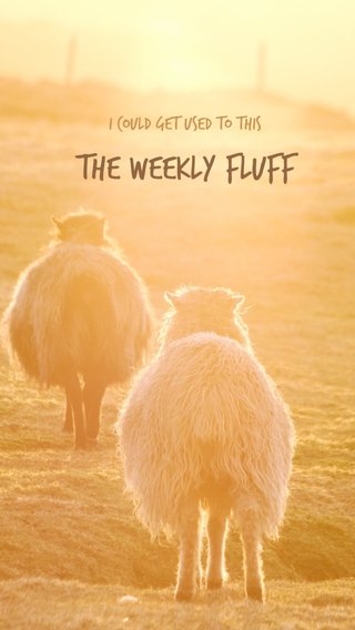 The WEEKLY FLUFF I could get used to this
