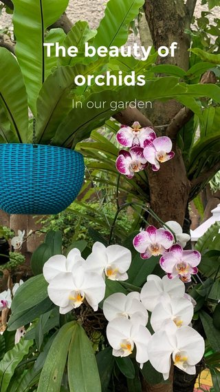 The beauty of orchids In our garden