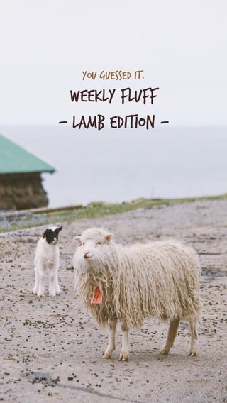 Weekly fluff - Lamb edition - You guessed it.