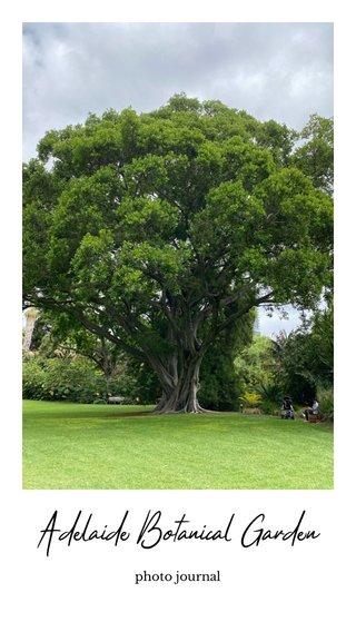 Adelaide Botanical Garden photo journal
