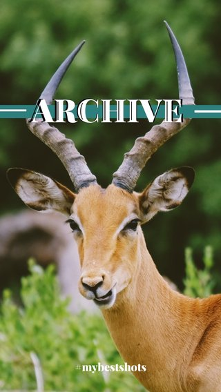 ARCHIVE ARCHIVE           ( #mybestshots