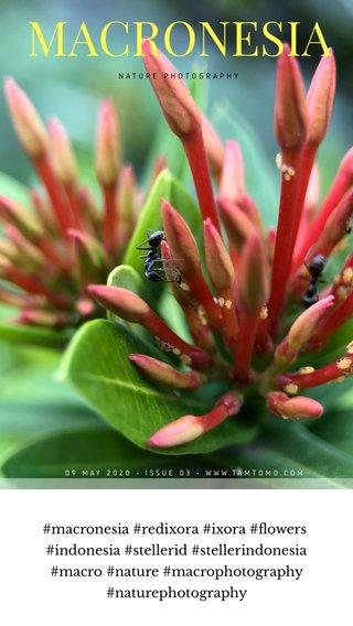 #macronesia #redixora #ixora #flowers #indonesia #stellerid #stellerindonesia #macro #nature #macrophotography #naturephotography