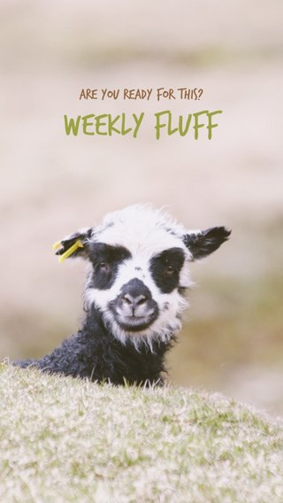 WEEKLY FLUFF Are you ready for this?