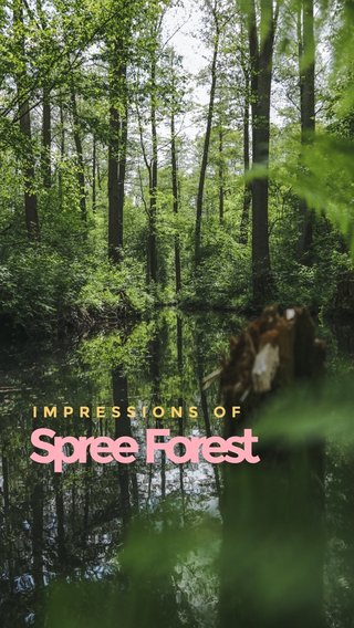 Spree Forest IMPRESSIONS OF