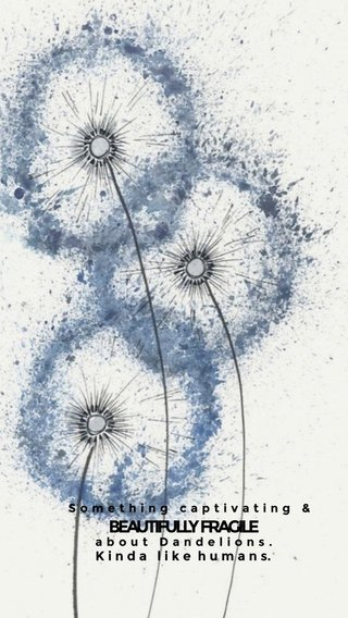 BEAUTIFULLY FRAGILE K i n d a l i k e h u m a n s. about Dandelions. Something captivating &