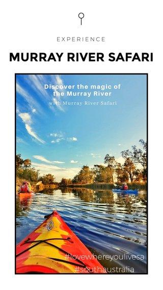 MURRAY RIVER SAFARI #lovewhereyoulivesa #southaustralia EXPERIENCE